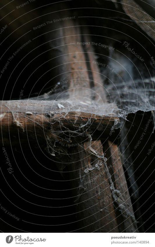 Tobi - Spiderman is gone! alt Einsamkeit dunkel Angst dreckig verfaulen Netz Insekt hängen Leiter Spinne Haushalt Panik Dachboden Spinnennetz spukhaft