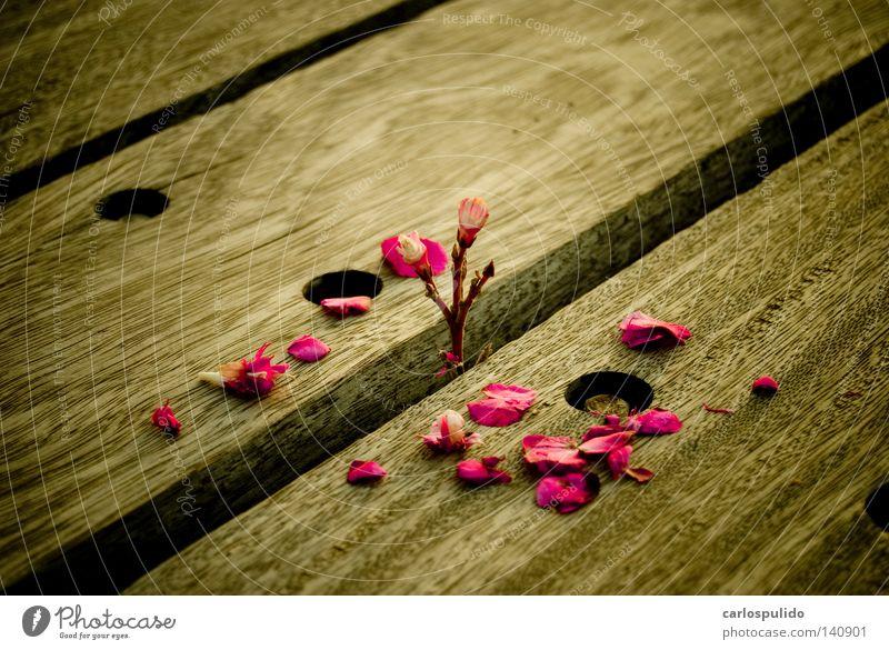 schön Blume Pflanze kaputt Dienst Sozialer Dienst