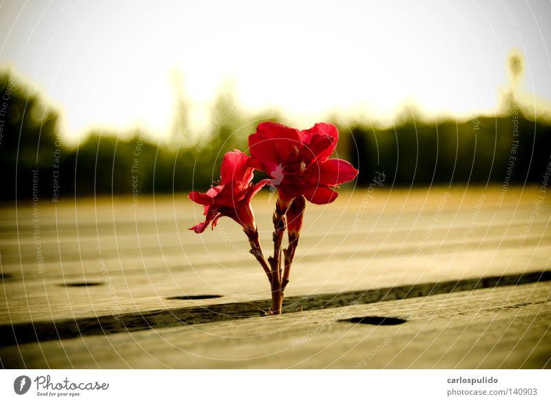 schön Blume Leben Kunst Hoffnung Blütenblatt Kunsthandwerk
