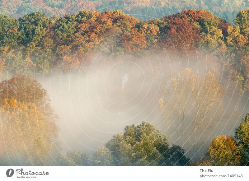 Paradies Wurmtal Natur Pflanze grün Farbe Baum Landschaft Blatt Wald Umwelt gelb Herbst Holz braun Stimmung Deutschland Nebel