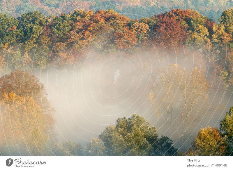 Paradies Wurmtal Umwelt Natur Landschaft Pflanze Herbst Schönes Wetter Nebel Baum Blatt Wald Hügel Flusstal Tal Würselen Aachen Deutschland Europa Holz