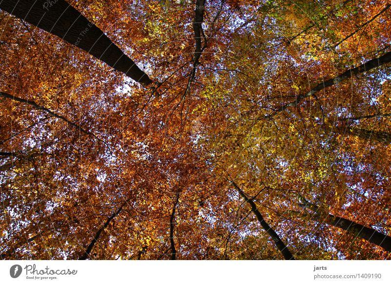 überdacht Pflanze Himmel Herbst Schönes Wetter Baum Blatt Wald frisch hell natürlich schön Gelassenheit ruhig Natur Baumstamm Laubbaum Farbfoto mehrfarbig