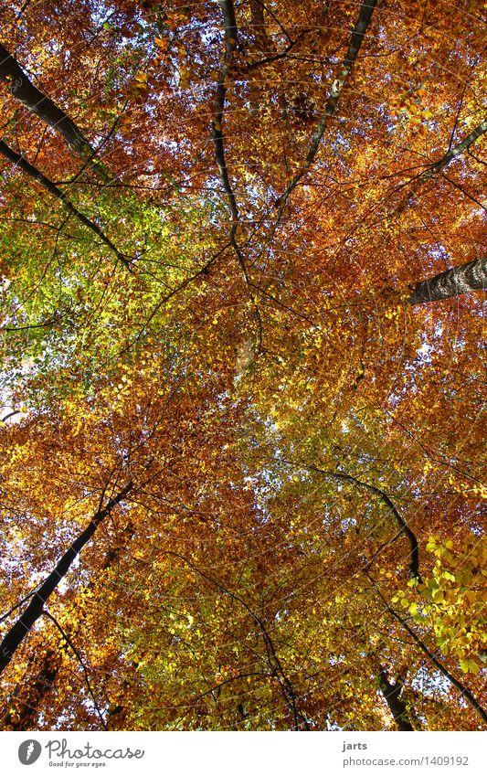 alle farben Natur Landschaft Pflanze Himmel Herbst Schönes Wetter Baum Blatt Wald frisch glänzend hell natürlich schön ruhig Dach wettergeschützt mehrfarbig