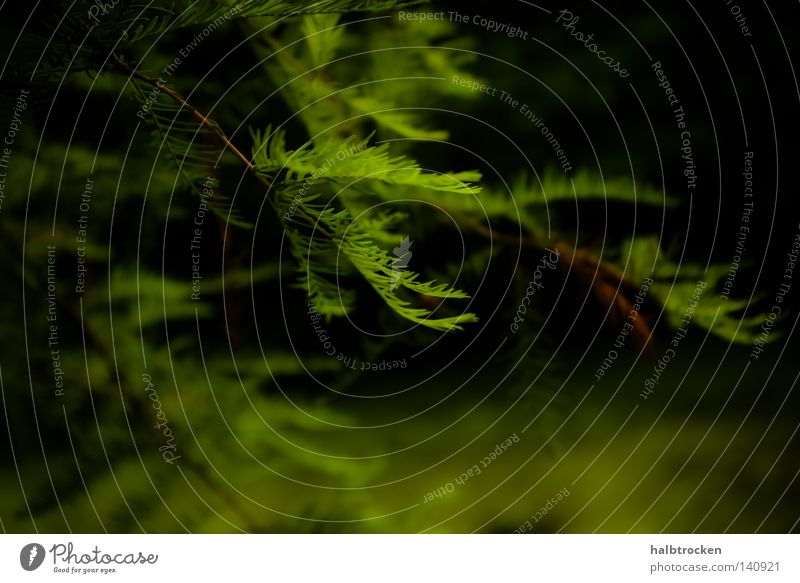 Who stole the sky? I Natur grün Baum Sommer Blatt ruhig Erholung Freizeit & Hobby Spaziergang