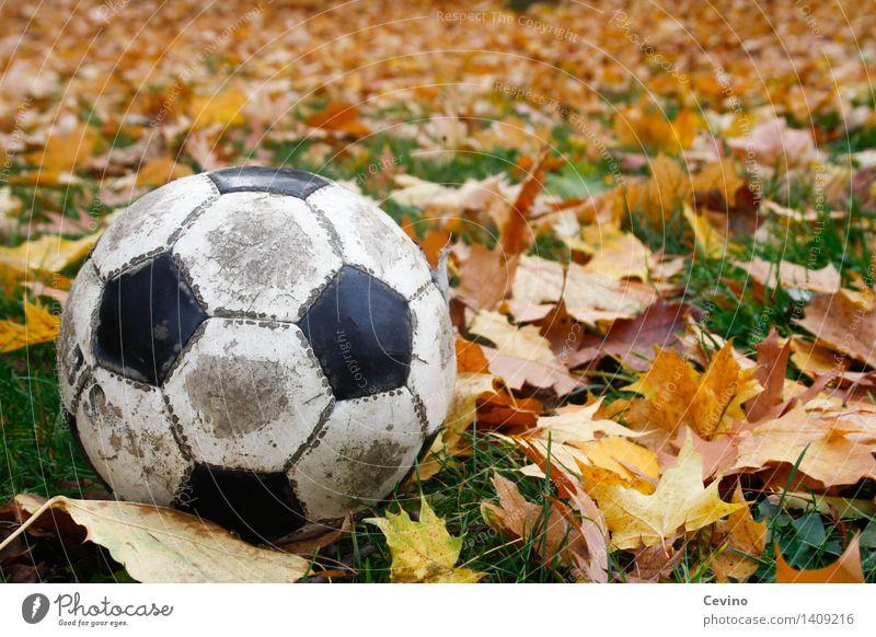 Herbstspiel Sport Ballsport Fußball alt Wiese Gras Kontrast Freizeit & Hobby herbstlich Herbstlaub Herbstfärbung Herbstlandschaft rund Farbfoto mehrfarbig