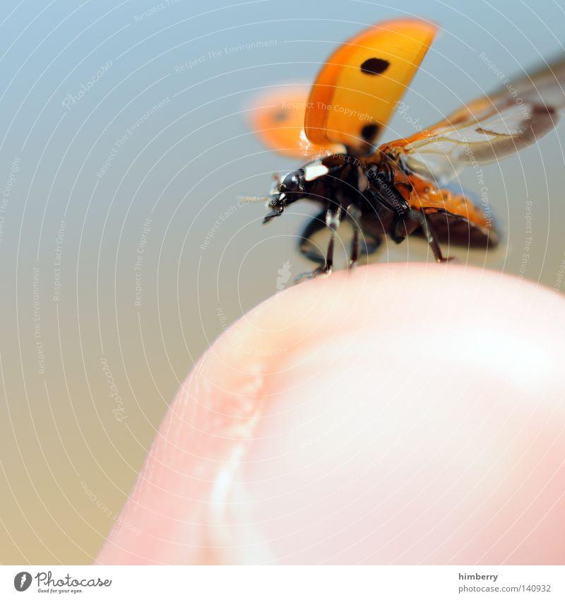 flugstunde Mai Marienkäfer Tier Schiffsbug Finger klein Natur grün Abheben Zoo Insekt gehen wegfahren Sommer Makroaufnahme Nahaufnahme Käfer animal ladybug