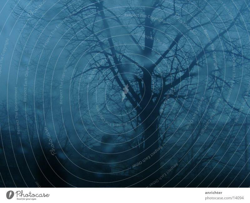 trübe aussichten Natur Baum Herbst Traurigkeit Regen