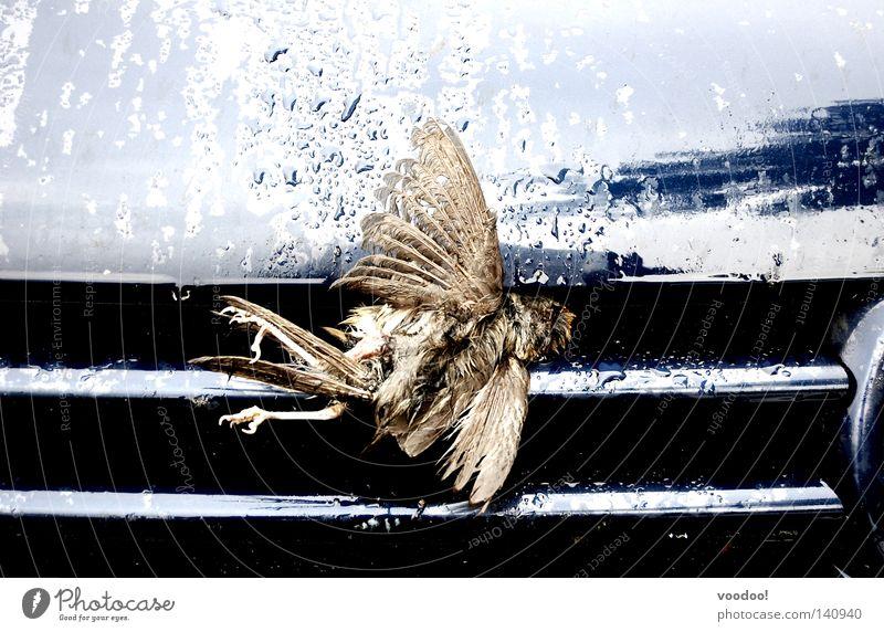Der Tod fuhr zu schnell. Sensenmann Aufschlag Vogel PKW hart Unfall fliegen Fliegenfalle flugunfähig Todesbote toter Vogel kein natürlicher Tod ciao Luftverkehr