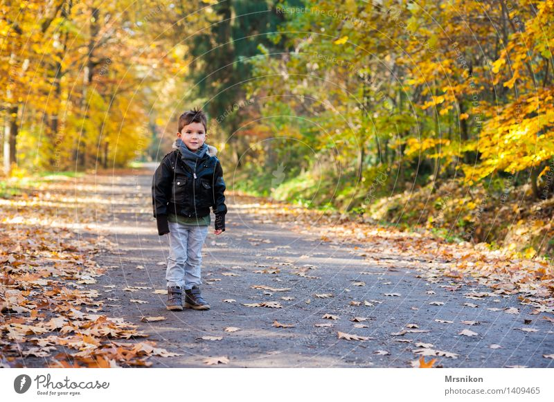 Ein Junge steht im Walde Kind Kleinkind Kindheit Leben 1 Mensch 3-8 Jahre Natur Herbst Blatt stehen Fußweg Wege & Pfade Einsamkeit herbstlich Herbstlaub