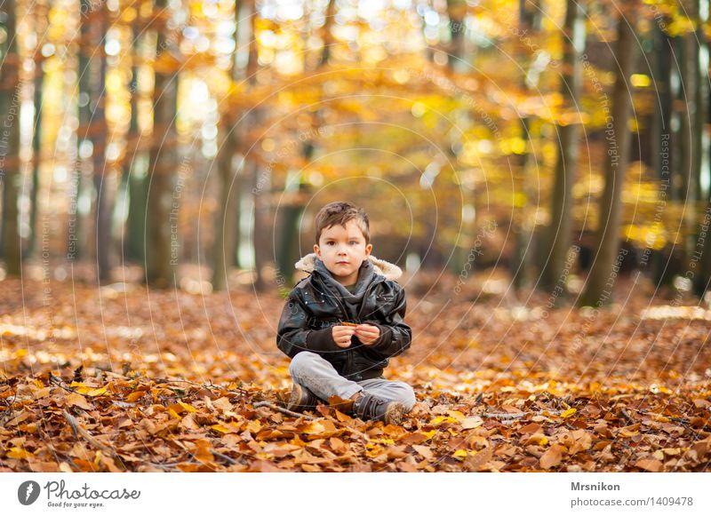 Im Wald Kind Kleinkind Junge Kindheit Leben 1 Mensch 3-8 Jahre Natur Herbst Schönes Wetter sitzen schön Schneidersitz Blick anschauend warten Einsamkeit brünett