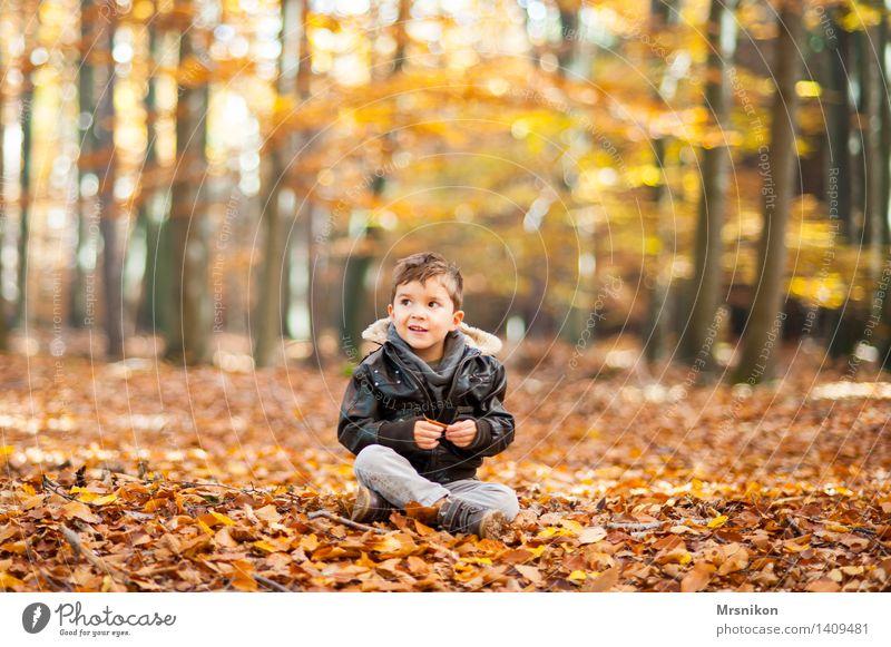 Im Herbstwald Kind Kleinkind Junge Kindheit Leben 1 Mensch 3-8 Jahre Natur Wald Lächeln sitzen herbstlich Herbstlaub Waldboden Blatt Laubbaum Laubwald