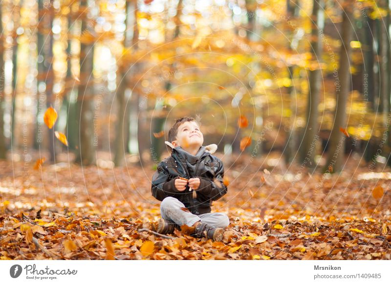 Herbst Mensch Kind Blatt Wald Leben Junge lachen Glück sitzen Kindheit Fröhlichkeit Lächeln fallen Kleinkind Herbstlaub
