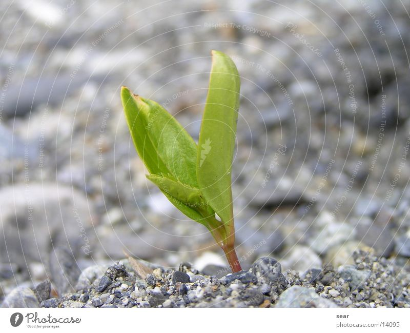 einsam Pflanze Kies grün grau Stein olympus