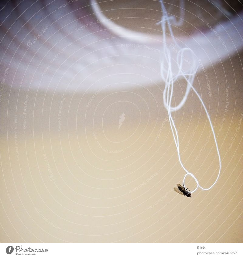 .Lass dich nicht so hängen! Berghang Fliege Lampe binden hängen lassen ruhig Müdigkeit Pause Floh Flügel Knoten matt ungestört hell schwarz weiß Vignettierung