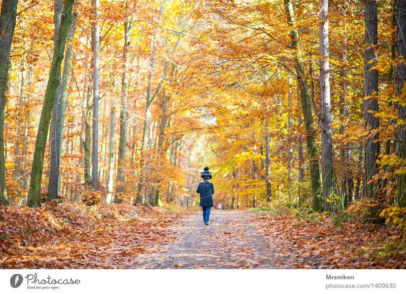Auf dem Weg Mensch Kind Landschaft Wald Erwachsene Leben Herbst Familie & Verwandtschaft Glück Zusammensein wandern Kindheit laufen Fußweg Spaziergang Kleinkind
