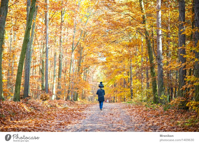 Auf dem Weg Mensch Kleinkind Eltern Erwachsene Vater Familie & Verwandtschaft Kindheit Leben 2 1-3 Jahre 3-8 Jahre 30-45 Jahre Landschaft Herbst Wald laufen