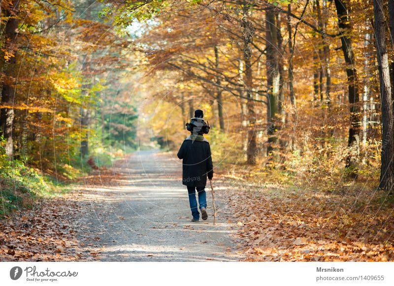 das wandern Mensch Kind Natur Mann Wald Erwachsene Leben Liebe Herbst Junge Familie & Verwandtschaft Menschengruppe gehen Zusammensein Kindheit