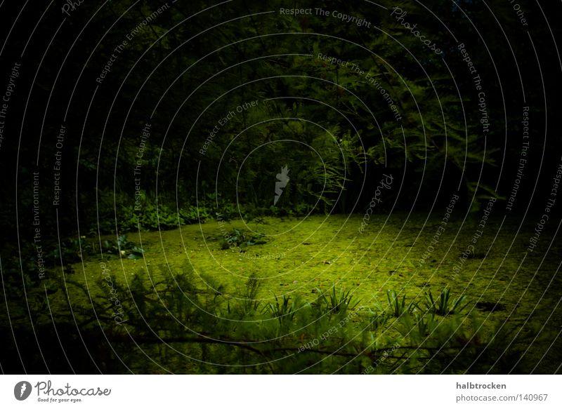 Who stole the sky II Baum grün Sommer ruhig Wald dunkel Erholung Spaziergang tief Teich Tiefenschärfe