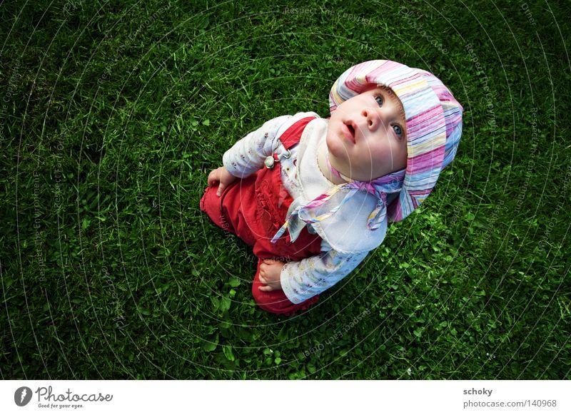da schau her Kleinkind Kind Gras Sommer grün Sehnsucht Blick staunen niedlich Blick nach oben aufwärts rot Mädchen Wiese Außenaufnahme Querformat Blick hinaus