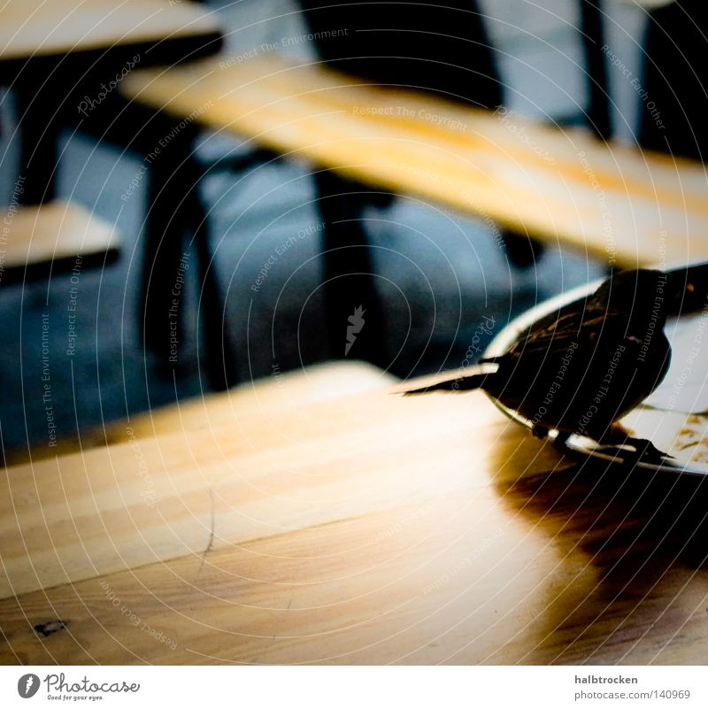 Berlin-Bird Stadt Tier Ernährung Lebensmittel Freizeit & Hobby Vogel fliegen Alltagsfotografie