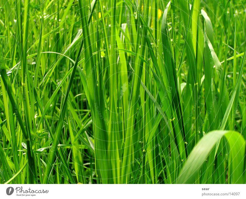 grüne idylle Natur Ferien & Urlaub & Reisen Gras Freiheit Idylle