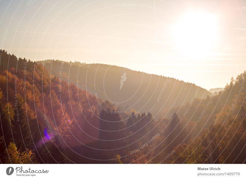 Waldhügel im Sonnenlicht Umwelt Natur Landschaft Himmel Sonnenaufgang Sonnenuntergang Herbst Schönes Wetter Wärme Baum Hügel Herbstwald Laubwald Mischwald Ebene