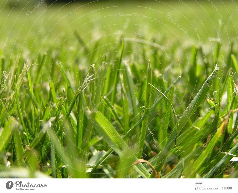 zerhackt grün Wiese Gras Rasen zerkleinern Rasenmäher