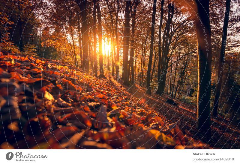 Sonnenwald 3 Umwelt Natur Sonnenaufgang Sonnenuntergang Sonnenlicht Herbst Schönes Wetter Wärme Baum Blatt Wald Hügel Herbstwald Blätterdach Laubbaum Farbfoto