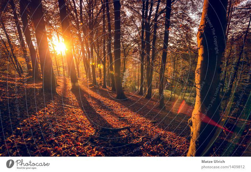 Sonnenwald 2 Umwelt Natur Landschaft Pflanze Sonnenaufgang Sonnenuntergang Sonnenlicht Herbst Schönes Wetter Baum Blatt Laubwald Laubbaum Herbstwald herbstsonne