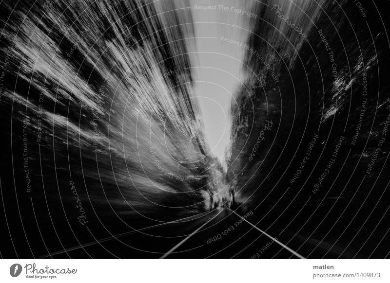 fleeing Verkehr Verkehrswege Straßenverkehr Autofahren bedrohlich dunkel schwarz weiß Baum Vorbeiflug Flucht Fluchtweg Schwarzweißfoto Außenaufnahme Experiment