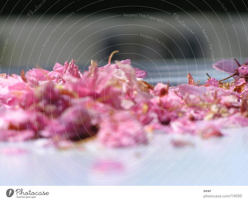 blüten Natur Sommer Blüte Frühling violett verblüht