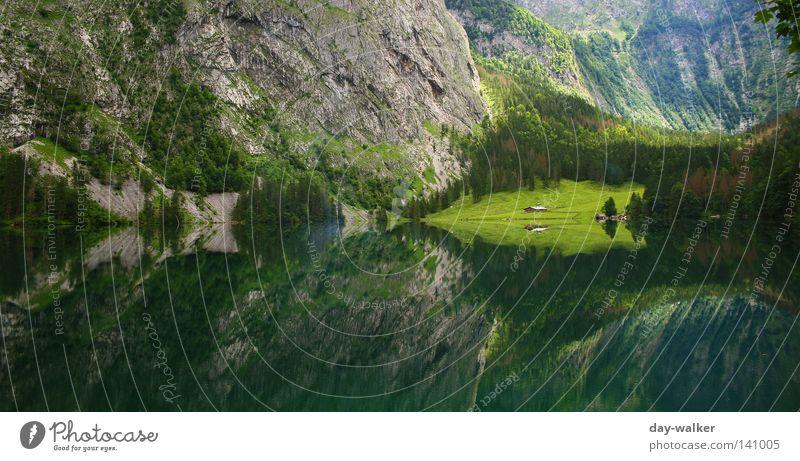 Spiegelung am Königssee Natur Wasser Baum Pflanze Wald Berge u. Gebirge See wandern Felsen Klettern Alpen Tanne Oberbayern Bayern Wasserfall Bergsteigen