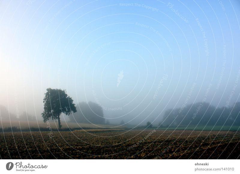 Ein Traum in Baum Einsamkeit Feld Rasen Morgen zart Himmel blau Dunst Nebel schön ruhig Beginn harmonisch Natur Hoffnung Neuanfang Landschaft Außenaufnahme