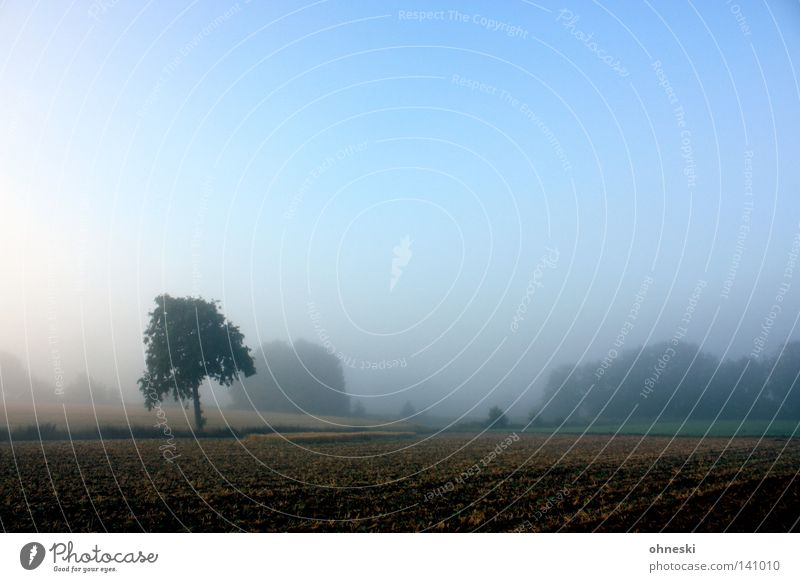 Ein Traum in Baum Himmel Natur blau schön Einsamkeit ruhig Landschaft Feld Nebel groß Beginn Hoffnung Rasen zart Neigung