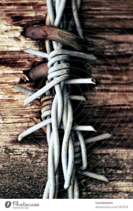 Befestigung Zaun Grenze Holz Stacheldraht Draht Haken Öse netzartig Halterung Zwang Splitter kaputt hart streng stachelig gefährlich Detailaufnahme Pfosten