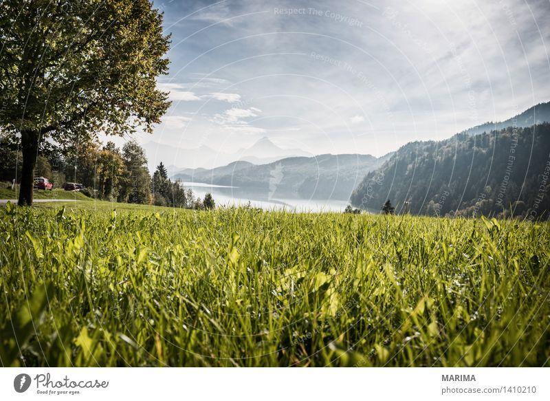 Autumn day in the Allgäu ruhig Ferien & Urlaub & Reisen Sonne Berge u. Gebirge wandern Umwelt Natur Landschaft Pflanze Wasser Herbst Nebel Baum Feld Hügel
