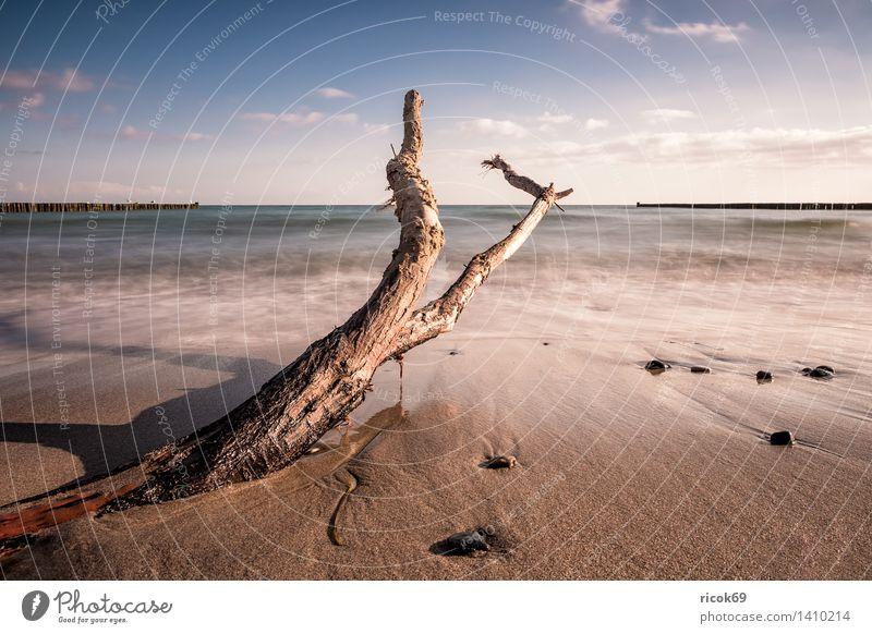 Treibholz an der Küste der Ostsee Natur Ferien & Urlaub & Reisen Wasser Erholung Meer Landschaft Wolken Strand Holz Stein Tourismus Idylle Wellen Romantik