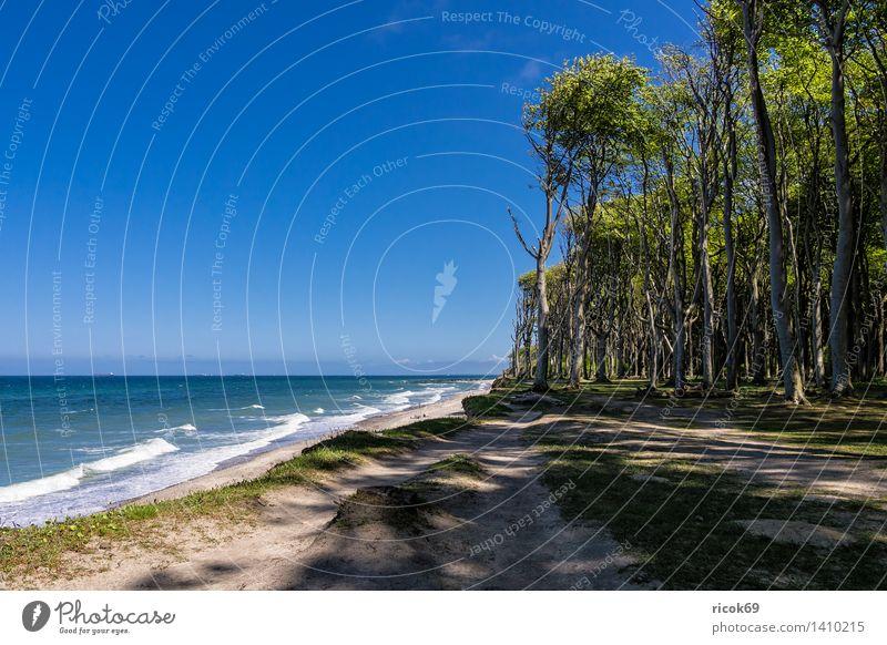 Küstenwald an der Ostseeküste Natur Ferien & Urlaub & Reisen blau Wasser Baum Erholung Meer Landschaft Wolken Strand Wald Wege & Pfade Tourismus Idylle Wellen