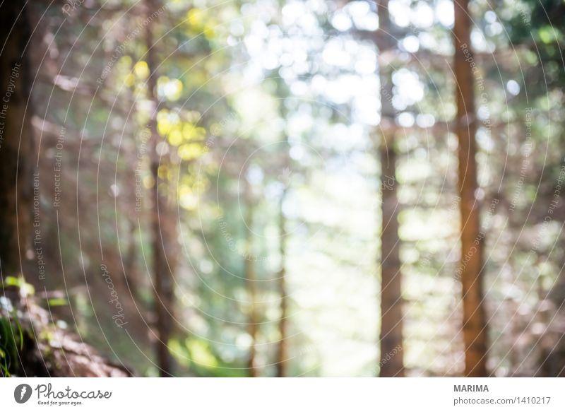Autumn day in the Allgäu Natur Ferien & Urlaub & Reisen Pflanze blau grün Sonne Landschaft ruhig Wald Berge u. Gebirge Umwelt Herbst Stein Deutschland Felsen