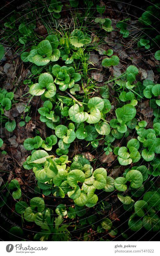 Natur schön Pflanze Sommer Gras Hintergrundbild Biologie Kulisse pflanzlich