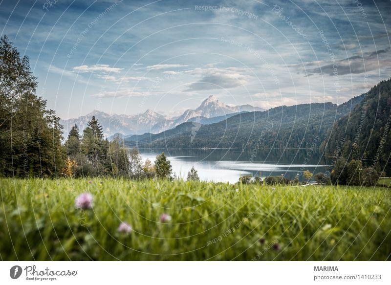 Autumn day in the Allgäu ruhig Ferien & Urlaub & Reisen Sonne Berge u. Gebirge wandern Umwelt Natur Landschaft Pflanze Wasser Herbst Feld Hügel Felsen Alpen