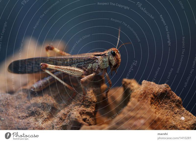 HEUteschonerSCHRECKt Tier Tiergesicht Flügel Zoo 1 Stimmung Heuschrecke Insekt essbar Ekel erschrecken Farbfoto Innenaufnahme Nahaufnahme Detailaufnahme