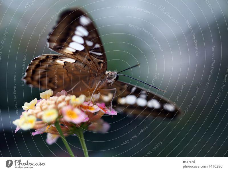 Pause einlegen und Nektar schlürfen Pflanze Tier Blüte Stimmung Flügel Schmetterling Zoo Fühler Schmetterlingsblütler Schmetterlingshaus