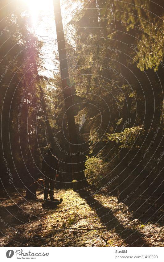 Sonne im Wald maskulin Junger Mann Jugendliche 1 Mensch 30-45 Jahre Erwachsene Baum Kiefer Fichte Fußweg Haustier Hund Jagdhund Tier Erholung leuchten Duft