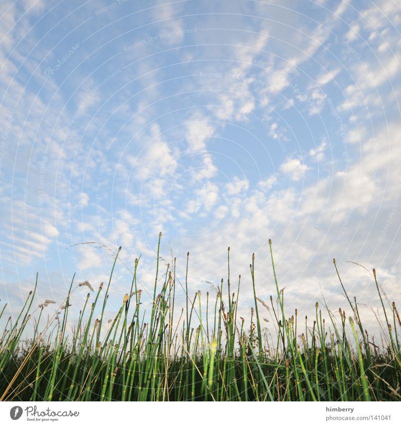 bett im kornfeld Feld Bauernhof Getreide Weide Gras Natur Landschaft Landschaftsformen Himmel Landwirtschaft Stengel Halm Pflanze ökologisch Bioprodukte