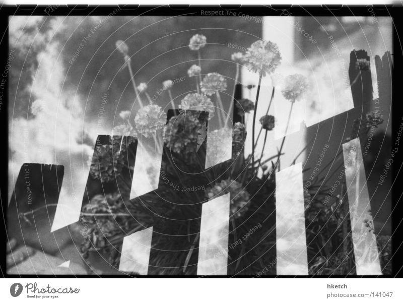 Heimatlicht Schwarzweißfoto Wohnung Himmel Wolken Blume Vertrauen Zaun Doppelbelichtung eingezäunt umfrieden analog