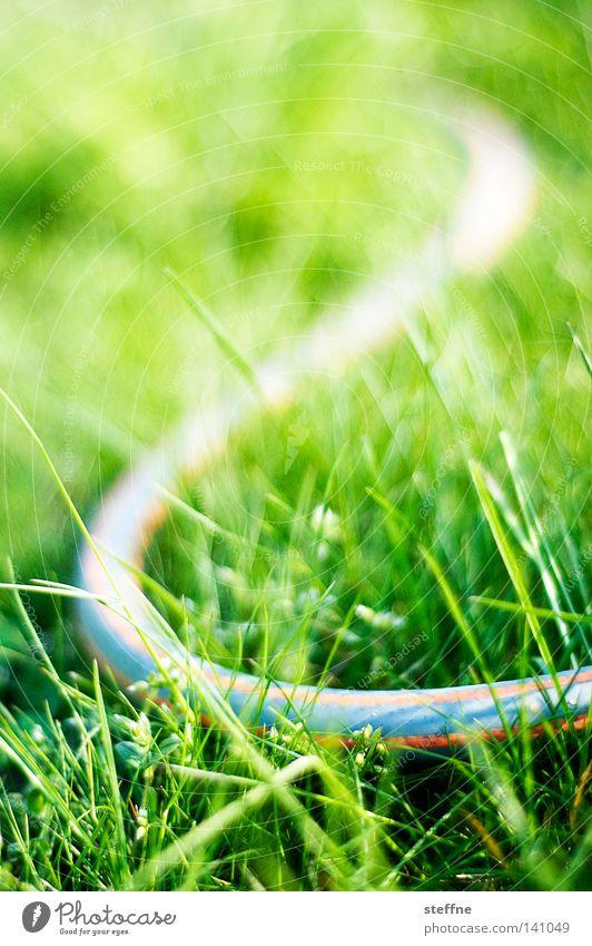 falsche Schlange Gift gefährlich Angst krabbeln Täuschung Garten Wiese Sportrasen Rasen Schlauch Gartenschlauch Wasser gießen Pflanze Blume Streifen gestreift