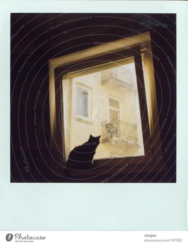 My first Polaroid schön Haus schwarz Tier dunkel Fenster Katze warten Wohnung sitzen offen Aussicht Frieden beobachten analog