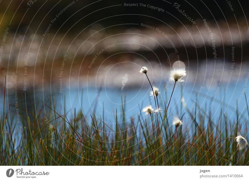 Go North! Natur Pflanze Blume Einsamkeit Landschaft ruhig Berge u. Gebirge Schwimmen & Baden See Erde Blühend Fluss Sehnsucht Gelassenheit Moos Bach
