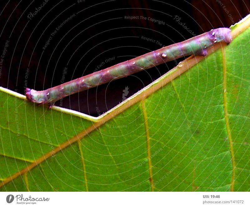 Stumpfwinkliges Dreieck. Natur Pflanze grün Blatt Tier Kunst Kraft ästhetisch Ernährung Brücke dünn stark Konzentration Appetit & Hunger Schmetterling
